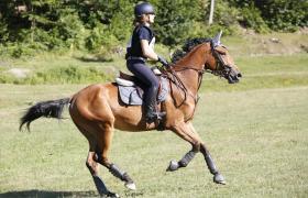 SPIDER HORSE